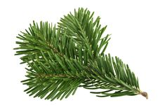 Fir tree isolated on white.  stock photography