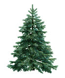 Fir-tree isolated on white stock illustration