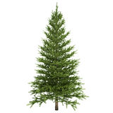 Fir Tree Isolated. On white Stock Images