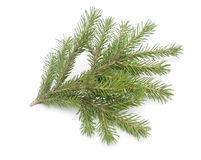 Fir-tree isolated on white Royalty Free Stock Photo