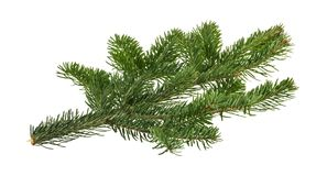 Fir tree isolated on white background.  stock photos