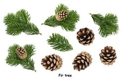 Fir tree isolated on white background.  royalty free stock photography