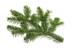 Fir tree isolated on white background.  royalty free stock photo