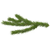 Fir tree isolated on white, 3d illustration. Isolated on white background Royalty Free Stock Photography