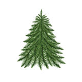 Fir tree isolated on white. Stock Photos