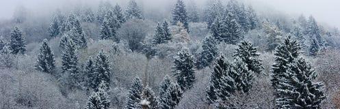 Fir-tree landscape panorama royalty free stock photo