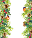 Fir tree, mistletoe, red finch bird. Christmas seamless border. Watercolor Royalty Free Stock Images