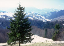 Carpathian landscape. Stock Photography