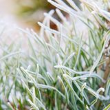 Fir tree needles close up Stock Photos