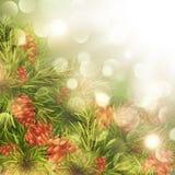 Fir Tree Over Bright Background. Fir Tree Brunches With PIne Cones Over Bright Background Stock Photo