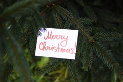 Fir-tree with paper card Stock Photo