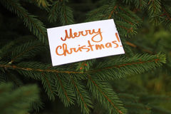 Fir-tree with paper card Stock Photography