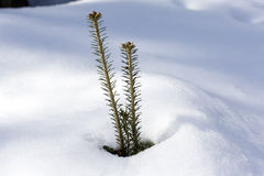 Fir tree peak Stock Photos