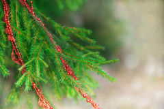 Fir tree with red garland Stock Photography