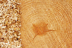 Fir tree rings with sawdust. Growth rings on freshly cut fir tree with saw dust border good background for the lumber industry Royalty Free Stock Photography