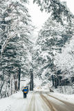 Winter snowy forest in Odaesan, Pyeongchang, Korea. Winter forest in Odaesan, Pyeongchang, Korea Royalty Free Stock Photography