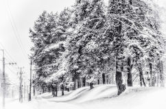 Fir-tree at the road Royalty Free Stock Image