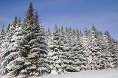 Fir tree Stock Photos