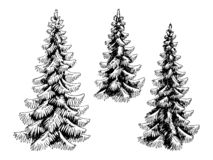 Free Fir Tree Set Spruce Graphic Black White Isolated Sketch Illustration Vector Royalty Free Stock Images - 138414639