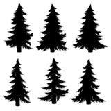 Fir Tree Silhouette Stock Photos