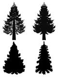 Fir Tree Silhouette. Collection of stylized black silhouettes of fir tree on white background Stock Images