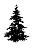 Fir tree silhouette isolated on white. Hand drawn ink illustration Royalty Free Stock Image