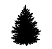 Fir-tree silhouette. Vector illustration of fir tree silhouette  on white background Royalty Free Stock Photos