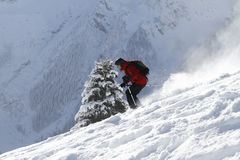 Fir_tree_skiing Royalty Free Stock Image