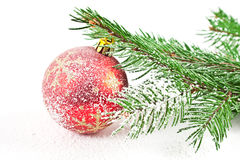 Fir tree snow Stock Photo