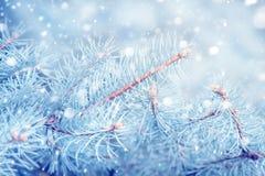 Fir tree with snow. Christmas background. Fir tree with snow. Christmas nature background stock image