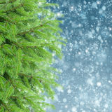With fir tree and snow Stock Image