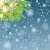 With fir tree and snow Royalty Free Stock Photography