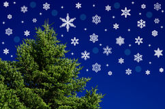 Fir tree and snow crystals Royalty Free Stock Images