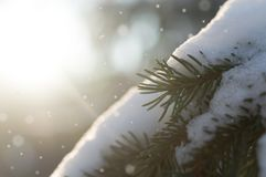 Fir tree with the snow on its branches and glows around royalty free stock photography