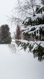 Fir tree with snow - wintertime Stock Photography