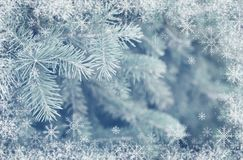 Fir tree and snowflakes frame. For winter background. Selective focus Royalty Free Stock Photo
