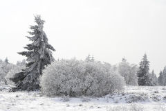 Fir tree on a snowy forest glade Stock Images