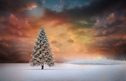 Fir tree in snowy landscape Stock Image