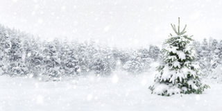Fir tree in thick snow. Outdoor panorama shot of a young fir tree in thick snow, for the perfect Christmas mood Royalty Free Stock Images