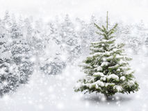 Fir tree in thick snow. Outdoor shot of a nice little fir tree in thick snow, for the perfect Christmas mood Royalty Free Stock Photo