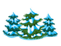 Fir-tree Stock Photos