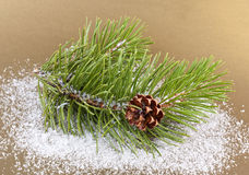 Fir-tree twig Stock Images