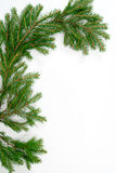 Fir-tree  twig, Stock Photography