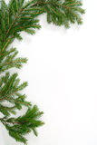 Fir-tree  twig, Royalty Free Stock Photo