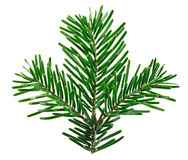 Fir tree twig isolated on white Stock Images