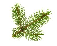Fir tree twig royalty free stock images