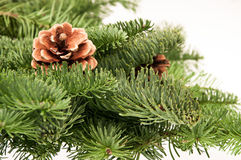 Fir-tree twigs with cones Stock Photography