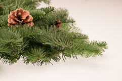 Fir-tree twigs with cones Royalty Free Stock Photo