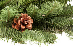 Fir-tree twigs with cones Stock Photo