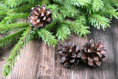 Fir tree twigs with three cones Stock Photo